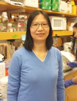 Tian Lian Huang, Ph.D. Lab Manager